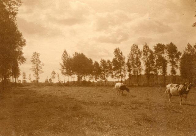 600758 - Landschap in de omgeving van Loon op Zand. Duinen en bossen.Kasteel Loon op Zand. Families Verheyen, Kolfschoten en Van Stratum