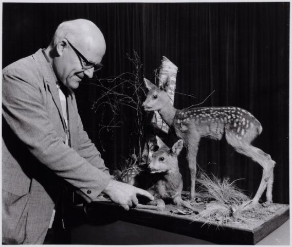 103866 - Tentoonstelling. Natuur Historisch Museum. Conservator W.J.A. van Boextel bij opgezette reeen.