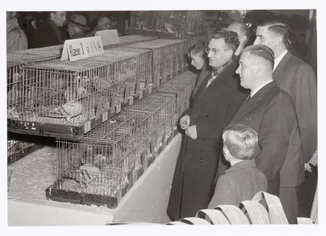 038777 - Volt Zuid. Sport en ontspanning. Tentoonstelling van de postduiven-vereniging P.V. de Voltvliegers in februari 1953. Voorgrond rechts Dhr.van Boxtel, achter hem Dhr. Jos Verelst.