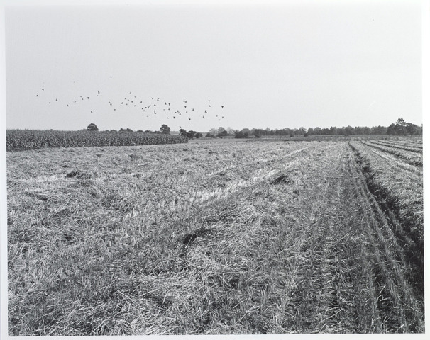 015451 - Landschap. Fase I de Blaak