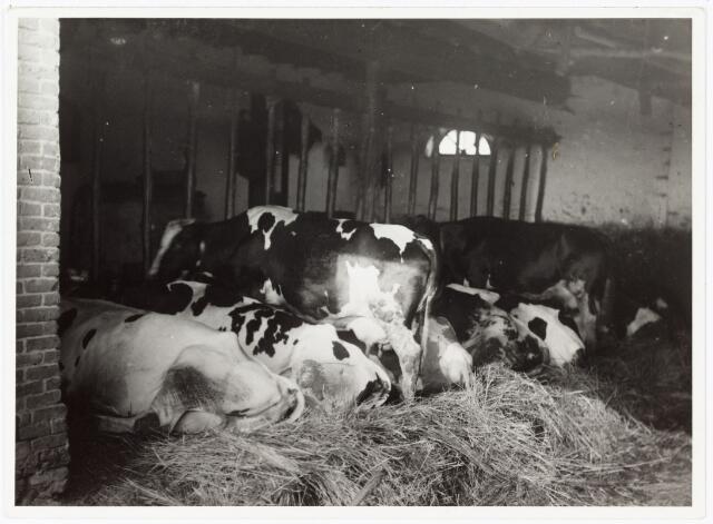 008491 - Koestal, gefotografeerd door Henri Berssenbrugge (1873-1959) begin 1900.