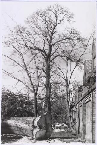 023228 - Duvelhok. Werkcentrum voor beeldende expressie.Het rooien van bomen in de tuin (foto gemaakt in periode 1972-1980)