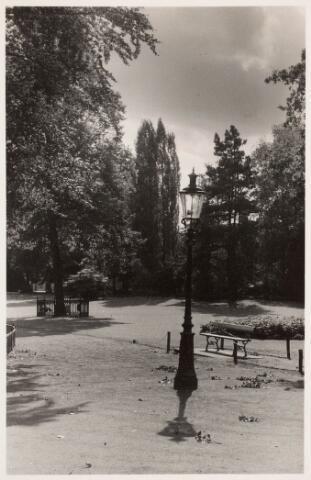 035131 - De Wilhelminaboom in het Wilhelminapark met lantaarn en bankje