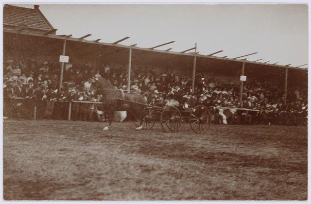 103842 - Sport. Tentoonstelling Stad Tilburg 1909 gehouden van 15 juli - 8 augustus 1909  Handel Nijverheid en Kunst. Het tentoonstelling-terrein was gelegen aan de 1e Herstalse Dwarsstraat (tussen Boomstraat en Industriestraat). Concours hipique.