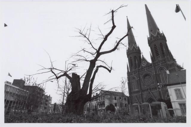 021414 - Heuvel met een zwaar afgetakelde lindeboom