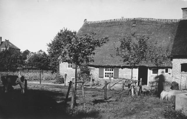105223 - Boerderij op het terrein van de Sint Paulusabdij. Koe in de wei. Kloosters