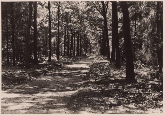 027876 - Oude Warande, wandelweg.