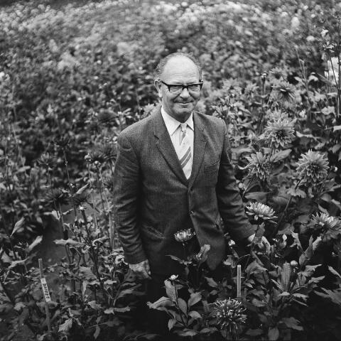 072821 - Portret van Willem Luijten. Hij was voorzitter van de  Goirlese Dalia Vereniging.