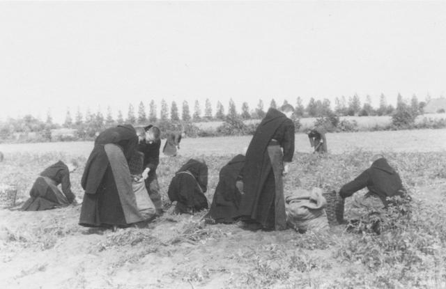 105288 - Monnikenleven Oogstwerkzaamheden op de landerijen van de Sint  Paulusabdij. Aardappels rooien door de monniken Kloosters. Sint Paulusabdij.