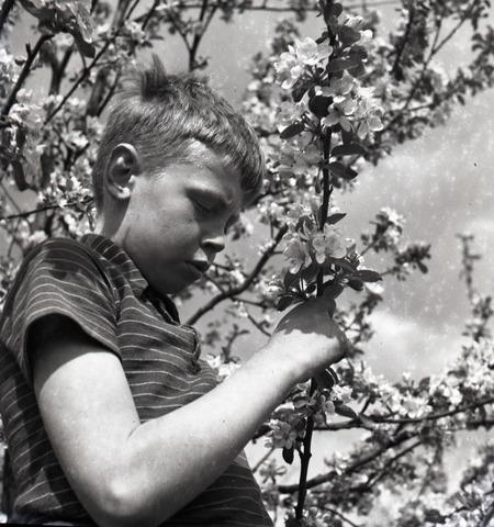 655009 - Portret. Onbekende jongen met bloesem.