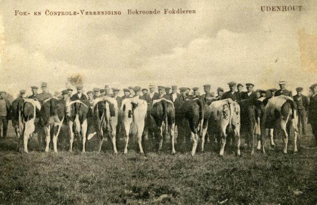 071587 - Fok- en controle-vereniging Udenhout, bekroonde fokdieren.