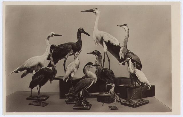 002538 - Steltlopers in het Natuurhistorisch Museum aan de Paleisstraat.