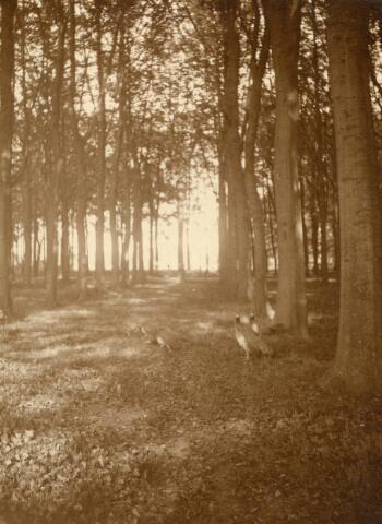 600800 - Landschap in de omgeving van Loon op Zand. Duinen en bossen.Kasteel Loon op Zand. Families Verheyen, Kolfschoten en Van Stratum
