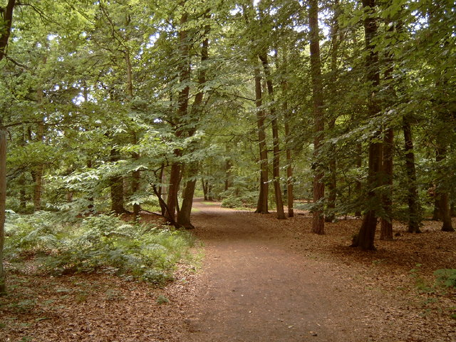 657194 - Natuur. De Oisterwijkse bossen en vennen.