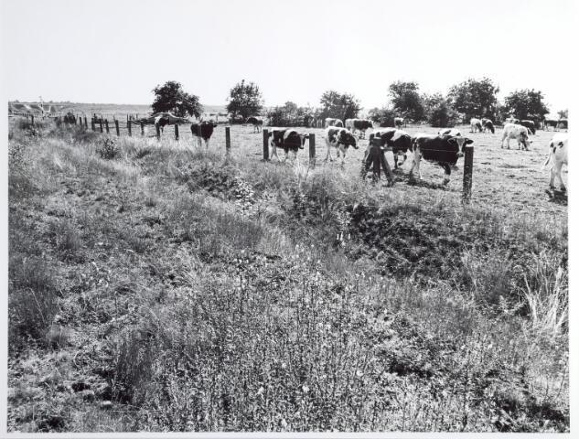 015330 - Landschap. Omgeving van de voormalige spoorlijn Tilburg - Turnhout, in de volksmond ´Bels lijntje´ genoemd