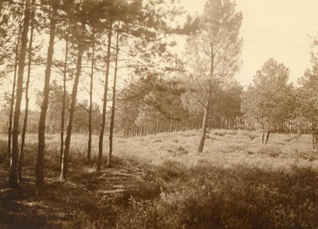 600778 - Landschap in de omgeving van Loon op Zand. Duinen en bossen.Kasteel Loon op Zand. Families Verheyen, Kolfschoten en Van Stratum