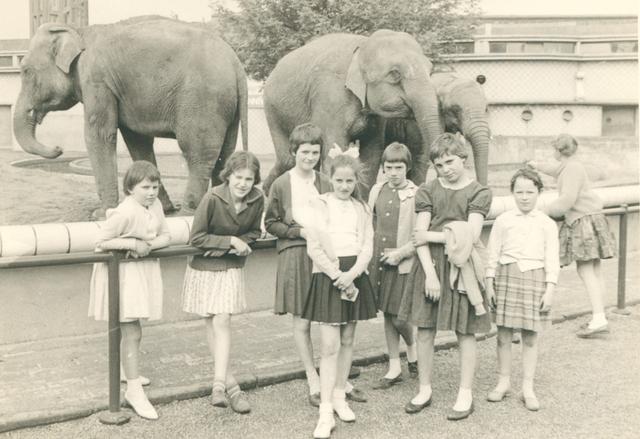 651630 - Meisjesschool Vincentius. Tilburg. Vroeger (in 1961 bijvoorbeeld) kon je de olifanten pinda's uit je hand laten pakken, alhoewel deze jonge dames meer interesse hadden in het poseren voor de fotograaf dan voor de grijze dikhuiden.