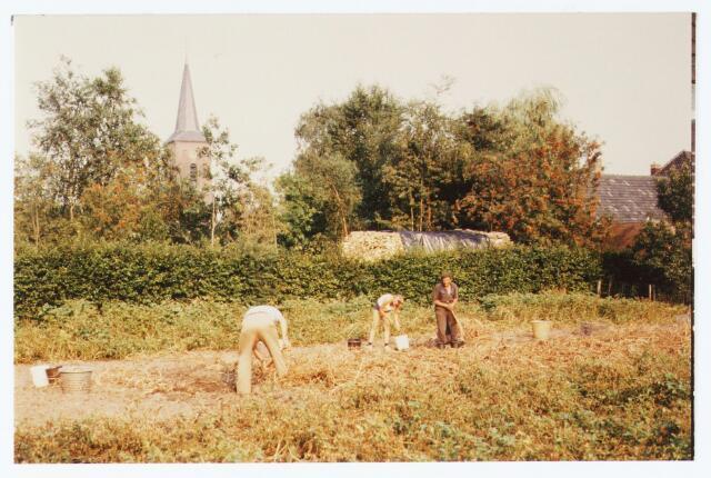 063708 - Aardappel rooien aan de Kloosterstraat te Berkel