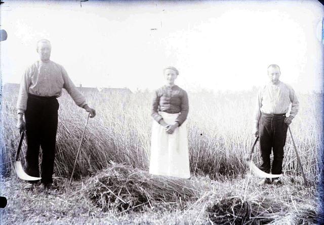 651596 - Mensen die met een zeis het land aan het bewerken zijn.  De Bont. 1914-1945.