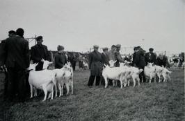 fokveedag, verenigingsgroepen geiten v¢¢r eretribune