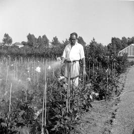 medewerker van de gemeente kwekerij Overwater aan de Langevielesingel