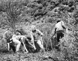 Vrijwilligers van de werkgroep Aktief Terreinbeheer aan het werk in de duinvalle…