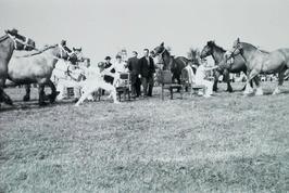 stoelendans met paarden