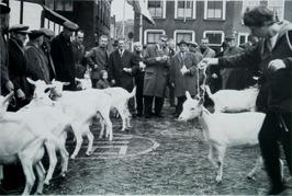 fokveedag; jury van de geiten in actie, de heren Looyen en Blom