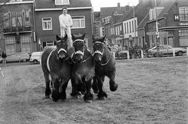 Trekpaardenkeuring.