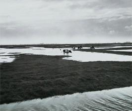 wateroverlast; ondergelopen weiden door veel regen