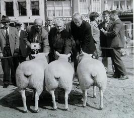 Provinciale fokvarkens- en fokschapendag