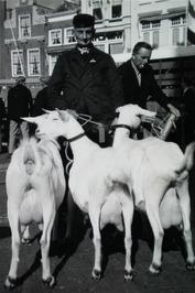 fokveedag; geiten; provinciale keuring, bedrijfsgroep van K. Kleinepier uit Zout…
