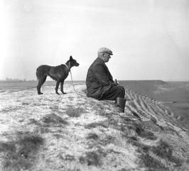 schaapherder, hond