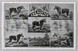 paarden van J. de Putter